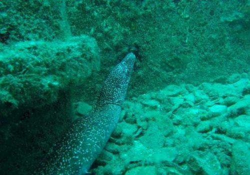 18moray-eel