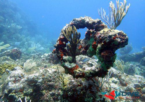 dive coral