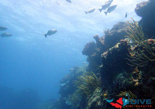 coralslogo