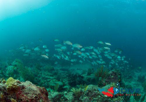 octopusfish2