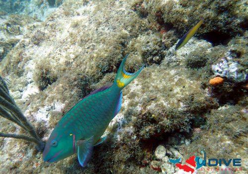 parrotfishlogo